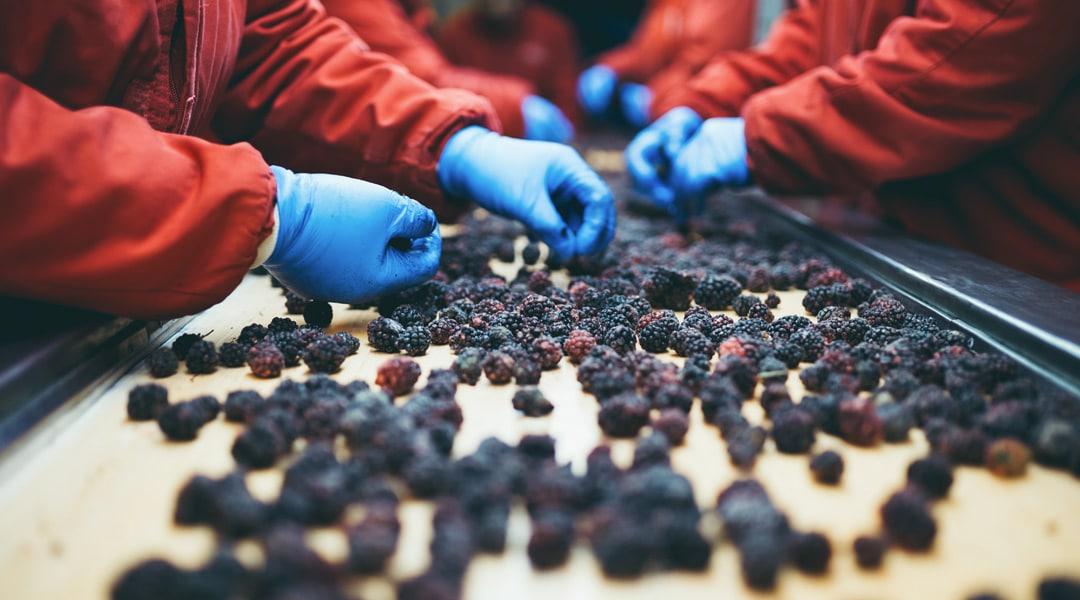 Triage des fruits